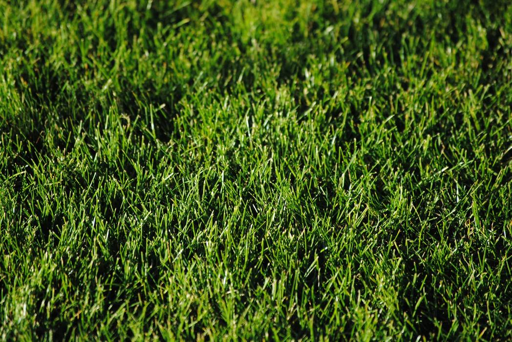 fröer-uppsala-gräsfrö-uppsala
