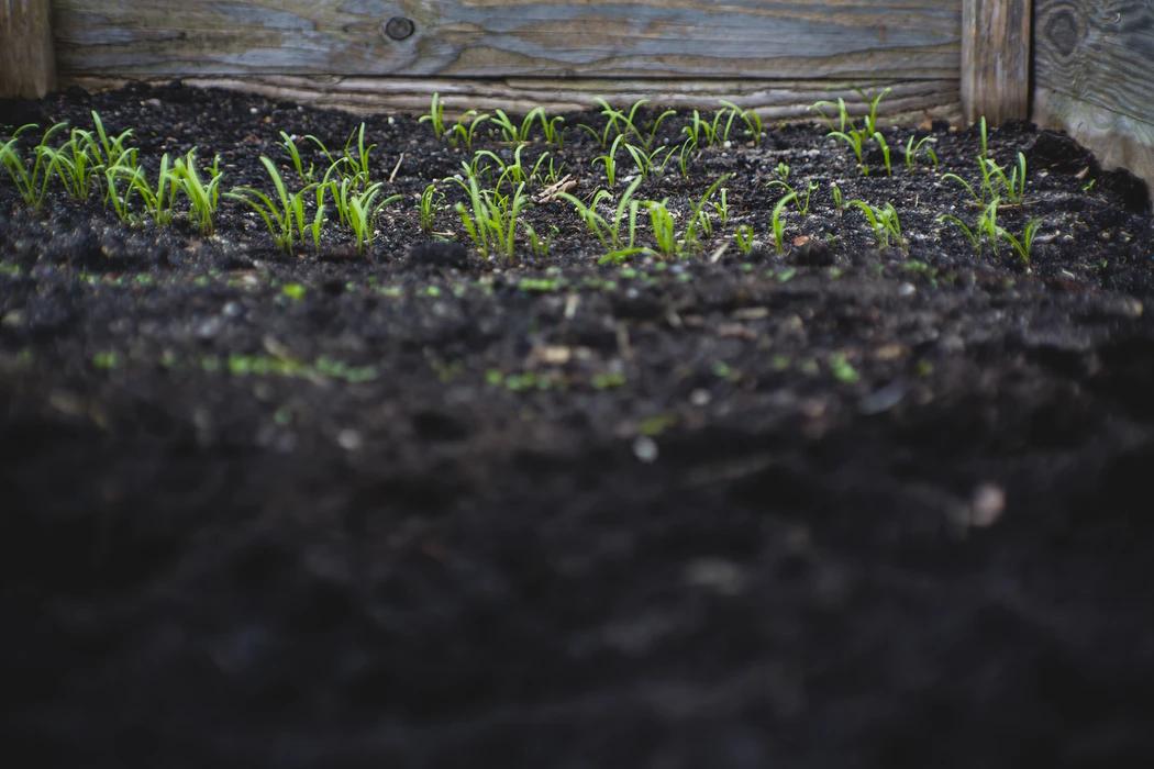 jord-uppsala-planteringsjord-uppsala